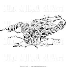 royalty free frog stock wildlife designs