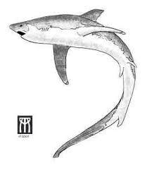 35 best shark heart tattoo images on pinterest best tattoos