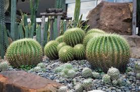 Cactus Garden Ideas Backyard Cactus Garden Outdoor Goods