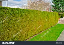 garden design garden design with grow your own home security garden design with green fence u from evergreen plants keeps privacy and security with large container