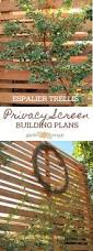 a diy espalier privacy screen for the backyard garden therapy