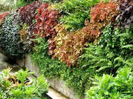 green walls living wall urban greening