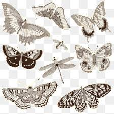 butterfly illustration png vectors psd and icons for free