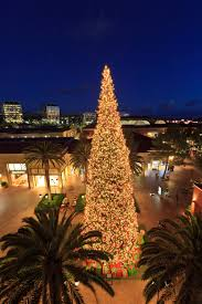 Halloween Tree Lights Round Up Of Top Events And Happenings In Newport Beach Ca