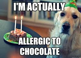 Funny Animal Birthday Memes - allergic to chocolate the funniest dog memes