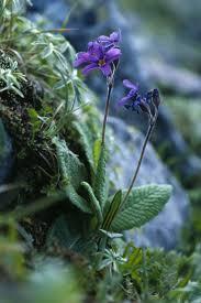 native irish plants best 25 vascular plant ideas on pinterest plant cell images