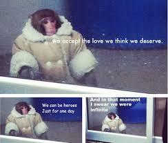 Ikea Monkey Meme - ikea monkey meme tumblr image memes at relatably com