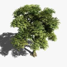 104 best tree images on landscaping plants and drawings