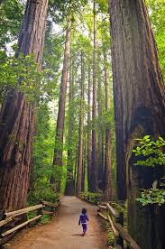 California forest images California travel ideas bff california usa and buckets jpg