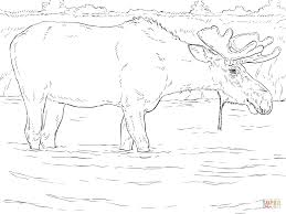 moose bull coloring page free printable coloring pages