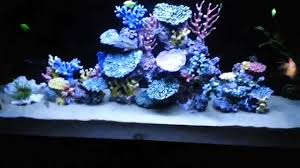 freshwater fish aquarium with artificial coral reef tank