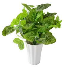 online get cheap indoor plant arrangements aliexpress com