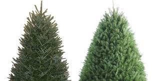 lowe s 25 fresh trees 3 5 foot fraser fir trees
