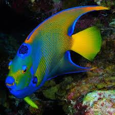 25 colorful fish ideas pretty fish beautiful