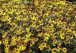 Xeriscape Landscaping Ideas Xeriscape Texas Native Plants For Drought Tolerant Resistant Design