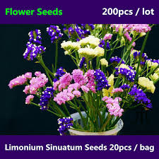 statice flowers beautifying limonium sinuatum seeds for planting 200pcs widely