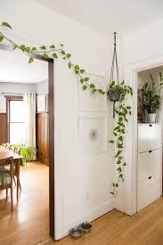 simple apartment decor how to decorate your rental pothos plant