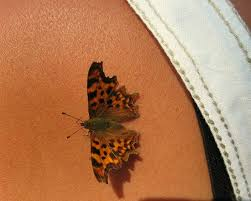 3d tattoos i this butterfly one e tattoos