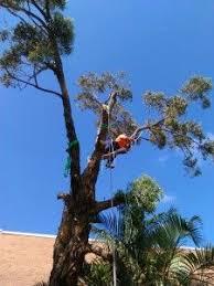 best 25 tree removal service ideas on pinterest service tree