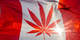 Canada Flag Colors Drawn Weed Canada Flag Pencil And In Color Drawn Weed Canada Flag