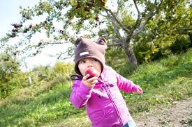 whens canadian thanksgiving apple picking orchards near montreal
