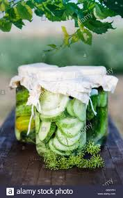 pickled cucumbers made with home garden vegetables and herbs stock