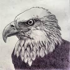 bald eagle pen sketch by joeyzeki on deviantart