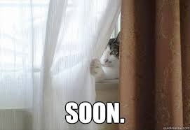 Sneaky Cat Meme - i now have proof twisted knickers publications