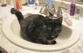 what is it about cats and sinks