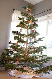 astonishing ideas silvertip fir tree this is the of