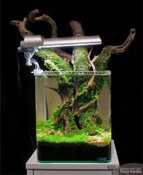 Planted Aquarium Aquascaping 27 Best Aquascapes Images On Pinterest Aquarium Ideas Plants