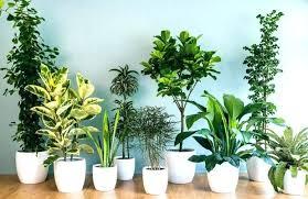plants for office desk best desk plants cool office furniture best indoor office desk