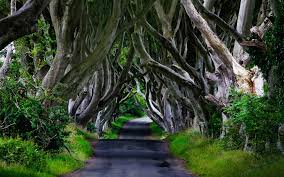 cool trees forests tree photography beautiful road walk beauty forest green