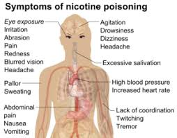 feeling light headed after smoking cigarette nicotine poisoning wikipedia