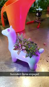 been seeing a lot of ceramic animal pots succulents