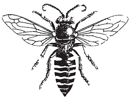 honey bee drawing free download clip art free clip art on