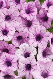 37 best easy garden plants images on pinterest garden plants