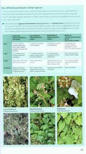 plants native to ireland field guide to invasive plants u0026 animals in britain olaf booy