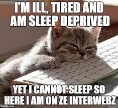Sleep Deprived Meme - tired cat imgflip