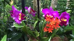 Botanical Gardens In Singapore by Singapore Botanic Gardens Chinese Lunar New Year 2015 At National