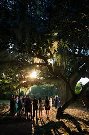 city park halloween new orleans tree of life new orleans la oldest tree in the city free