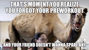 Camel Memes - hump day camel memes imgflip