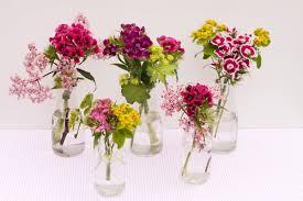 sweet william flowers friday flowers sweet williams for the weekend flowerona