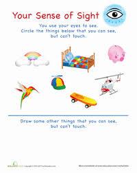 the 5 senses worksheets u0026 free printables education com