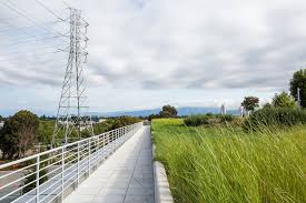 san francisco native plants how does facebook plant its garden in sync with nature san