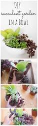 How To Make A Succulent Wall Garden by How To Plant A Succulent Container Garden In A Bowl