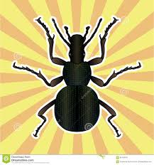 insect anatomy sticker ground beetle bug carabidae coleoptera