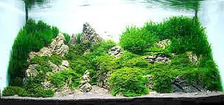 Mountain Aquascape Aquarium Plants Live Collections