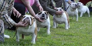 photos photo gallery cape cod kennel club dog show