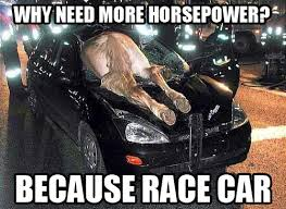 Ford Focus Meme - horse power sounds like an equine civil rights movement because